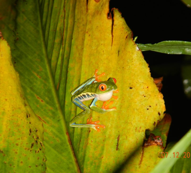 Wildlife Costa Rica Family Vacation 2