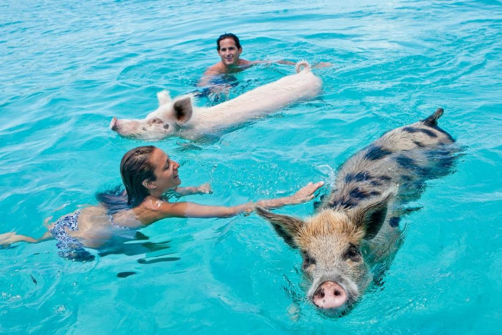 Exuma All Inclusive Resort - Island Routes Swimming with Pigs
